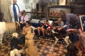 Photo of pets at Pet church service