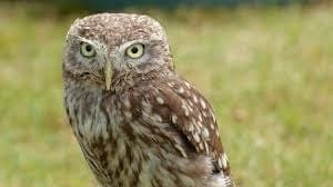 Photo of an owl
